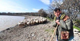 İçme suyu göletleri geldi, hayvancılık yeniden canlandı