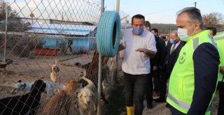Bursa'nın emekli hayvanlar çiftliği