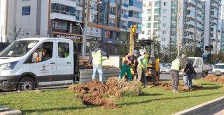 Büyükşehir 220 günde 5 bin ağaç dikti