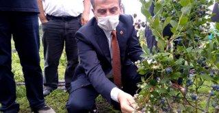 Toprak Büyükşehir'le bereketleniyor
