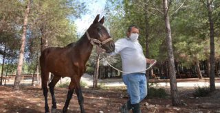 Ölüme Terk Edilen Atlar, Tarsus Doğa Parkı'nda Hayata Tutundu