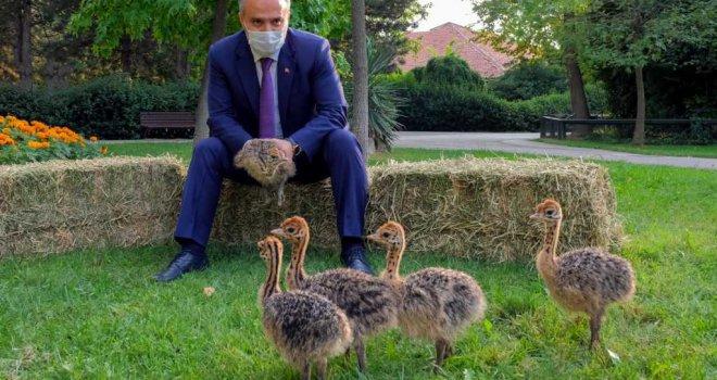Hayvanat Bahçesi yeni üyelerle büyüyor