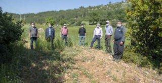 Mersin Büyükşehir'den Kaliteli ve Genetiği Değiştirilmemiş Buğday Üretimine Destek