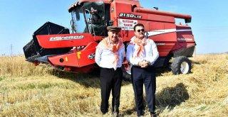 Başkan Soyer buğday hasadı yaptı